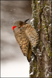 Flicker Fully Fluffed.jpg