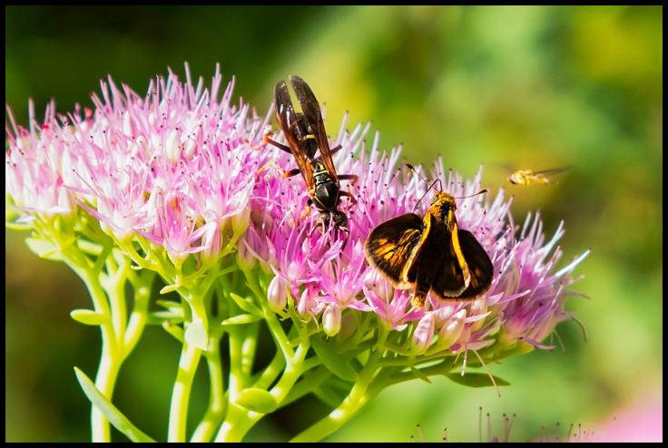 Pollenator Feast 1.jpg